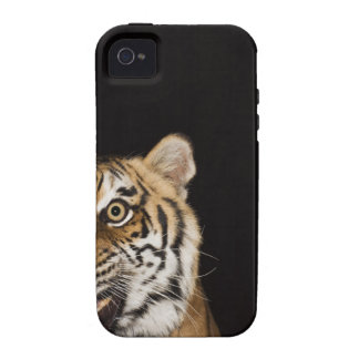 Close up of roaring tiger's face iPhone 4/4S cases