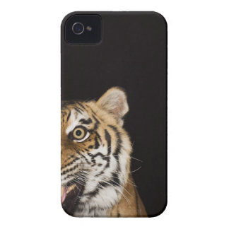 Close up of roaring tiger's face iPhone 4 case