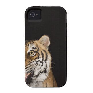 Close up of roaring tiger's face iPhone 4 cases