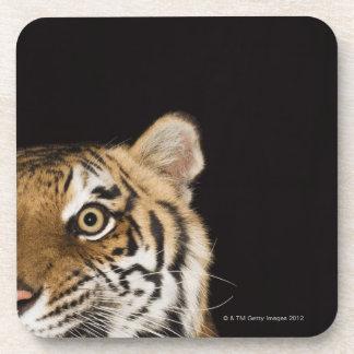Close up of roaring tiger's face coaster
