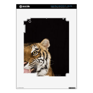 Close up of roaring tiger's face decal for iPad 3