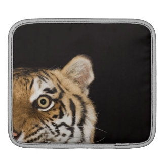 Close up of roaring tiger's face sleeve for iPads