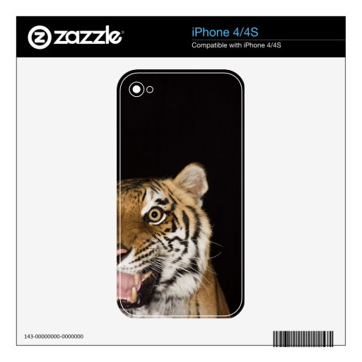 Close up of roaring tiger's face iPhone 4 skins