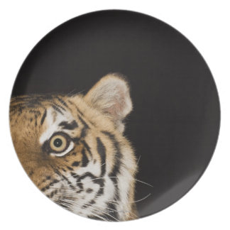 Close up of roaring tiger's face melamine plate