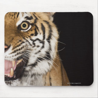 Close up of roaring tiger's face mouse pad