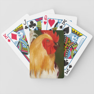 Close Up of Rooster: Original Oil Painting: Bird Bicycle Playing Cards