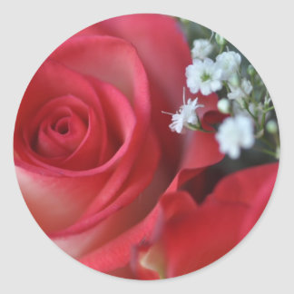 Close up of rose and baby's breath classic round sticker