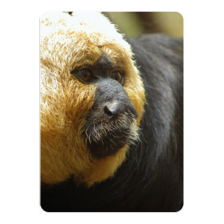 Close-Up of Saki Monkey Almost In Profile Card