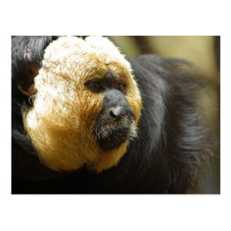 Close-Up of Saki Monkey Almost In Profile Postcard