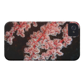 Close-up of Sea Fan underwater, North Sulawesi iPhone 4 Case