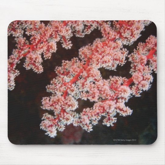 Close-up of Sea Fan underwater, North Sulawesi Mouse Pad