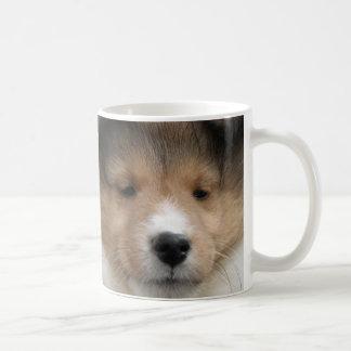 Close up of Shetland sheepdog puppy face on mug
