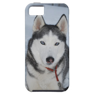 Close-up of SIBERIAN HUSKY in SNOW iPhone 5 Cover