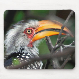 Close-Up Of Southern Yellow-Billed Hornbill Mouse Pad