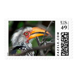 Close-Up Of Southern Yellow-Billed Hornbill Postage