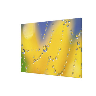 Close-up of spider web with dew drops canvas print