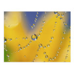 Close-up of spider web with dew drops postcard