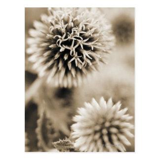 Close-up of spiky plants postcard