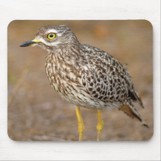 Close-Up Of Spotted Thick-Knee Mouse Pad