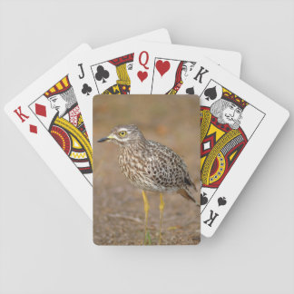 Close-Up Of Spotted Thick-Knee Poker Deck