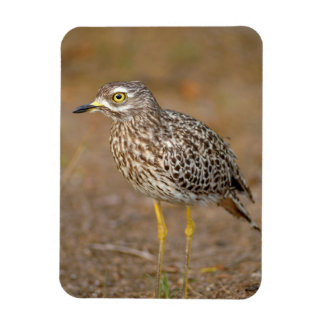 Close-Up Of Spotted Thick-Knee Rectangular Photo Magnet