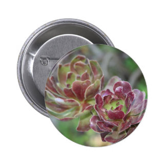 Close Up Of Succulent With Garden Background Buttons