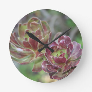Close Up Of Succulent With Garden Background Clock