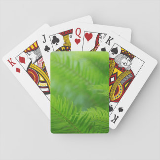 Close-up of sword fern deck of cards
