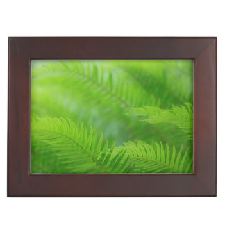 Close-up of sword fern memory boxes