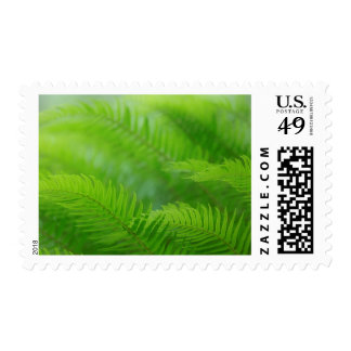 Close-up of sword fern postage