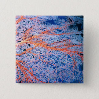 Close up of the coral, Okinawa, Japan Pinback Button