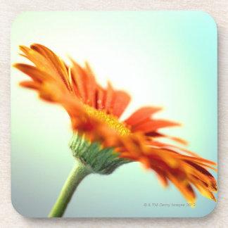 close-up of the petals of an orange gerbera drink coaster