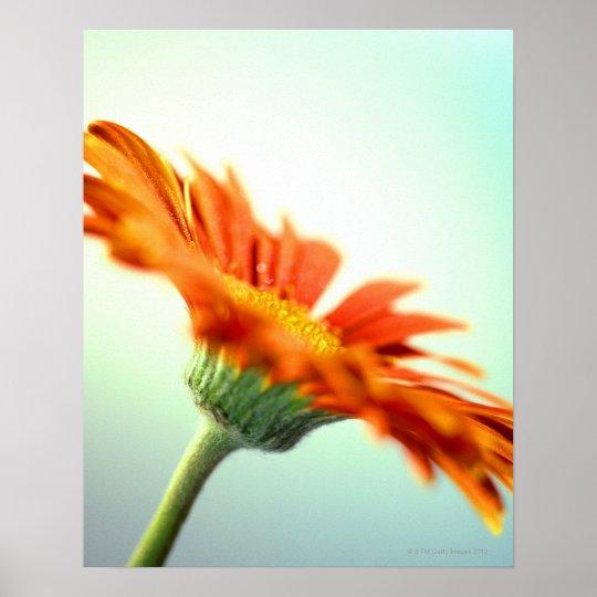 close-up of the petals of an orange gerbera poster