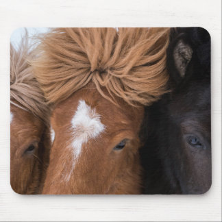 Close up of three Icelandic Horses Mouse Pad