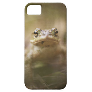 Close-up of toad iPhone 5 cases