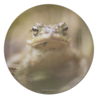 Close-up of toad melamine plate
