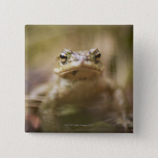 Close-up of toad pinback button