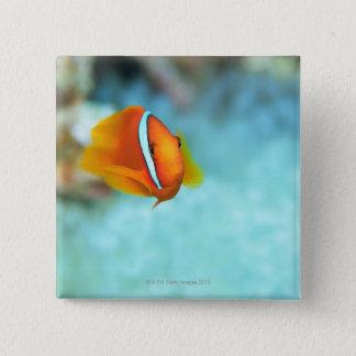 Close-up of tomato anemone fish, Okinawa, Japan Button