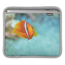 Close-up of tomato anemone fish, Okinawa, Japan iPad Sleeve
