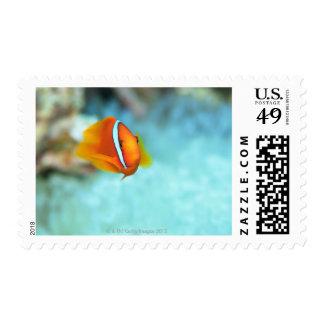 Close-up of tomato anemone fish, Okinawa, Japan Postage Stamps
