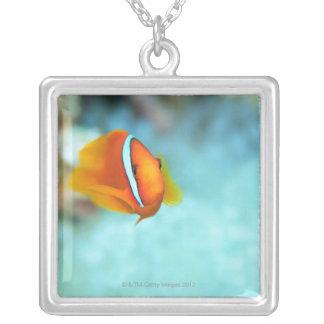 Close-up of tomato anemone fish, Okinawa, Japan Square Pendant Necklace