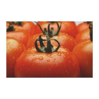 Close-up of tomatoes 2 wrappedcanvas