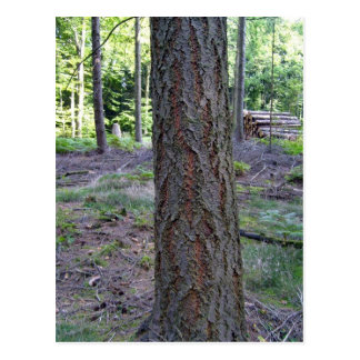 Close up of Tree Trunk in forest Postcard