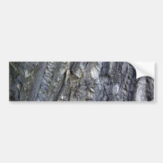 Close-up of tree trunk's grey bark car bumper sticker