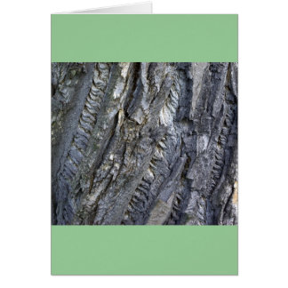Close-up of tree trunk's grey bark card