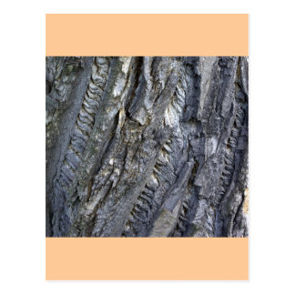 Close-up of tree trunk's grey bark postcards