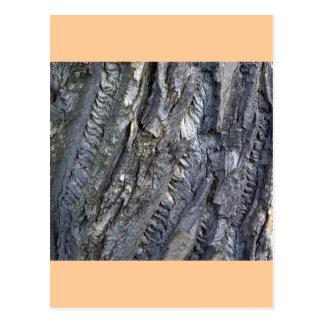 Close-up of tree trunk's grey bark postcard