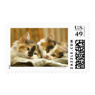 Close-up of two cats lying down postage