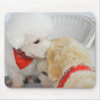 Close-up of two dogs mouse pad