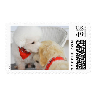 Close-up of two dogs postage